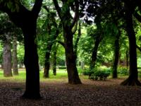 樹木葬とは