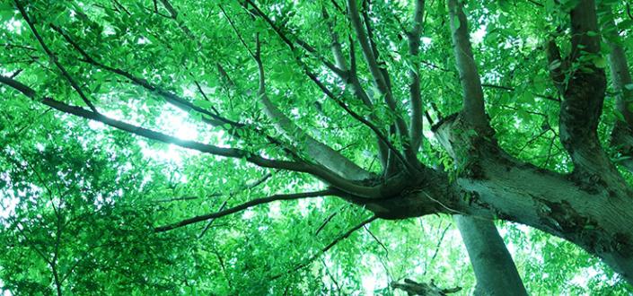 横浜 樹木葬 費用