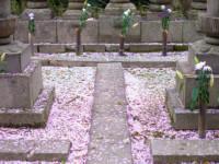 墓石に使う石材の種類について