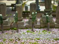 お墓の費用はローンで払えるの?