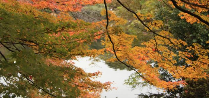 多磨霊園への納骨を検討している方に役立つ基本情報