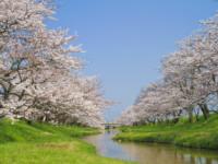 青山霊園への納骨を検討している方に役立つ基本情報