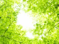 散骨と樹木葬の違い-samu