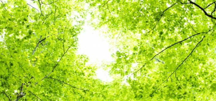 散骨と樹木葬の違い