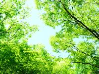 樹木葬に使われる木の種類