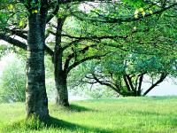 樹木葬の葬儀について