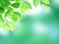 樹木葬の種類について