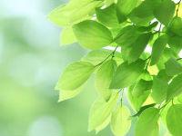 自然豊か!「八王子市営南多摩都市霊園」を徹底紹介!